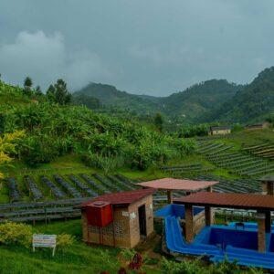 Rwanda coffee farm overview